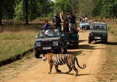 Safaris in India